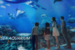 Harga Tiket SEA Aquarium Singapore 2019